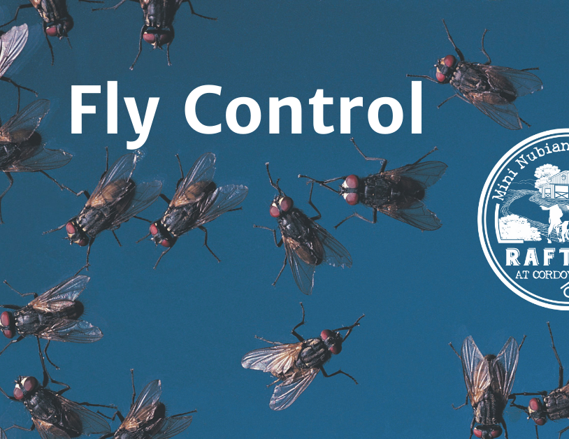 Blog: Fly Control