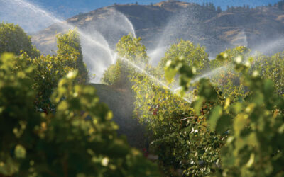 How to Reduce Energy Costs Associated with Winery Wastewater