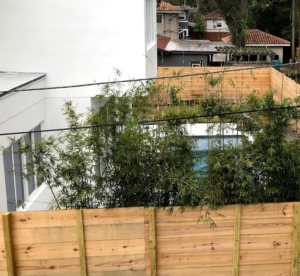 bamboo for privacy
