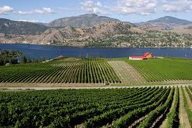 wine, winery, bc, british columbia, blasted church, vineyard, outdoor adventure