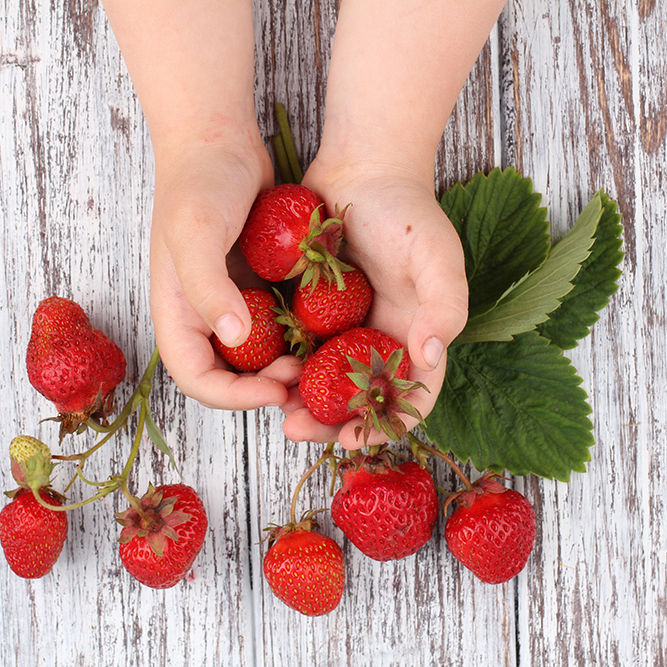 Child with strawberries_1000px
