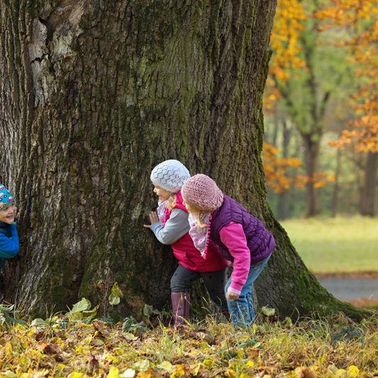 Kids PLaying Tree