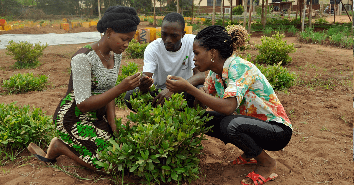 Students in the test field at UAC in Benin