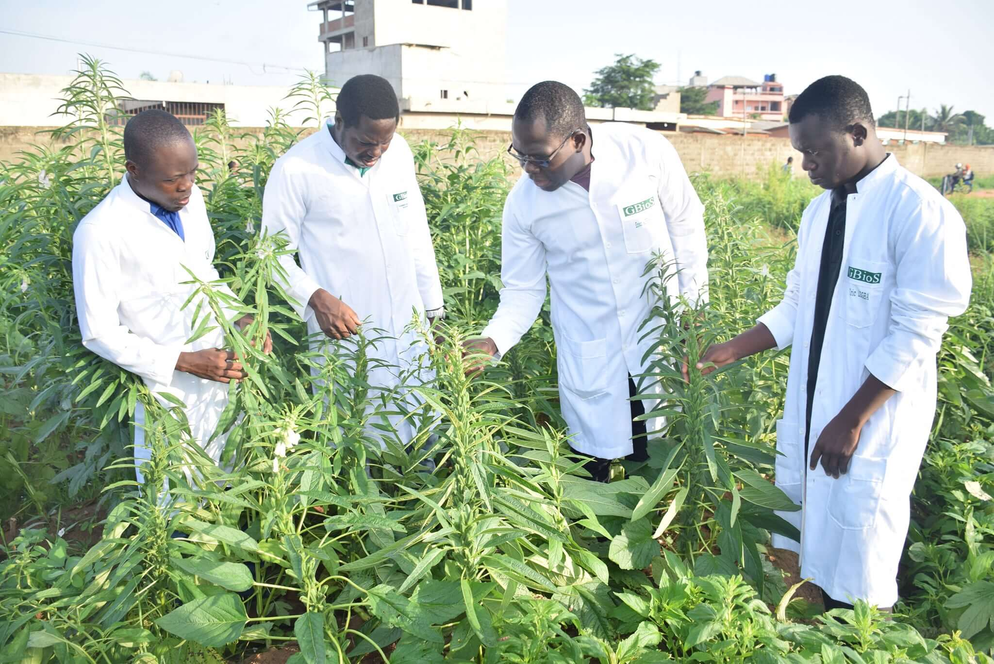 Dr. Enoch Achigan-Dako inspects crops in the university's teaching fields with his students