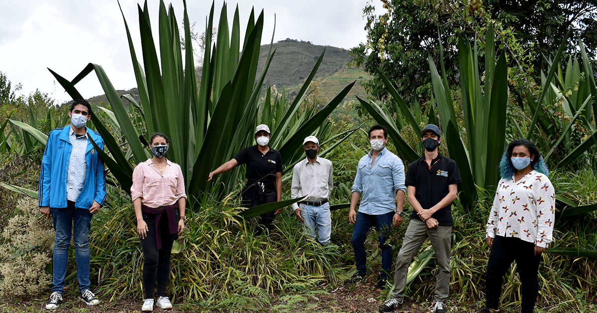 Dr. Esteban Garcia-Tamayo (second from right) and colleagues at the Universidad Pontifica Boliviarana are transforming fique, the plant pictured behind them, into energy