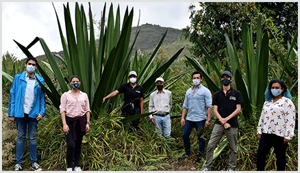 Dr. Esteban Garcia-Tamayo (second from right) and colleagues at the Universidad Pontificia Bolivariana are using fique plants, pictured behind them, to create new sustainable energy storage.