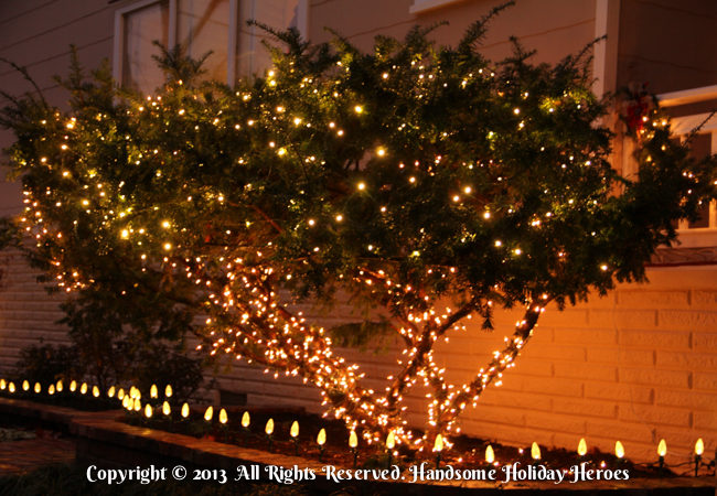 Christmas Light Installer Northwest Arkansas - Warm White Lights On Bush