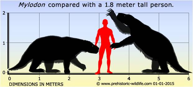 The Giant Sloth compared to an average size person.