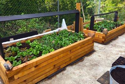 Cliff Broetz garden boxes
