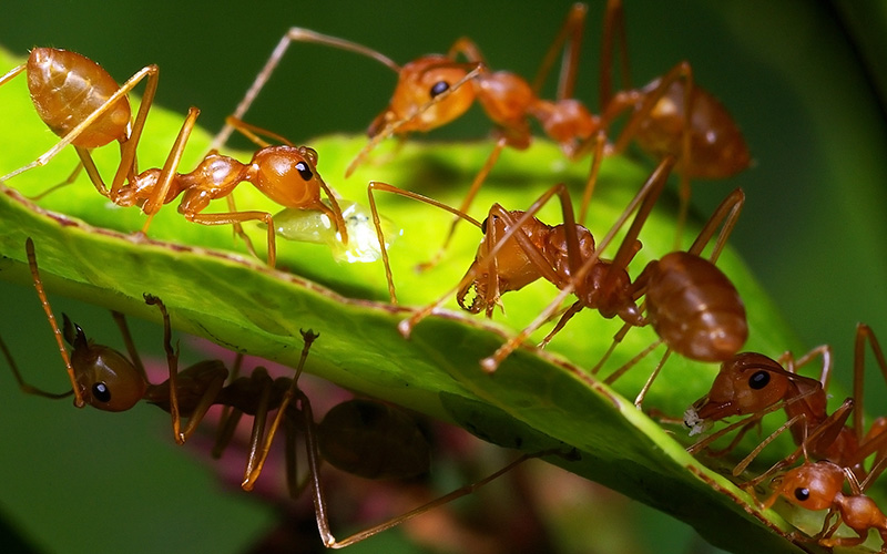 small-pests-lawn-control