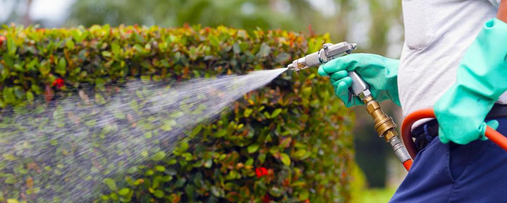 florida-lawn-care-services