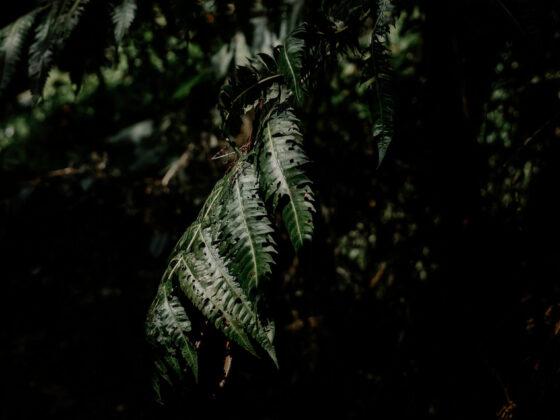 Dark photo of fern leaves