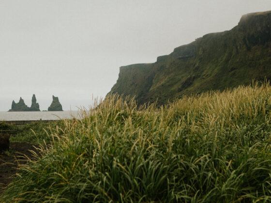 Long grass next to beach clif
