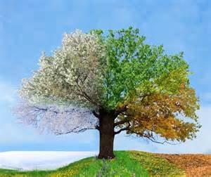 Faith in Seasons of Waiting by Lauren Luckhart