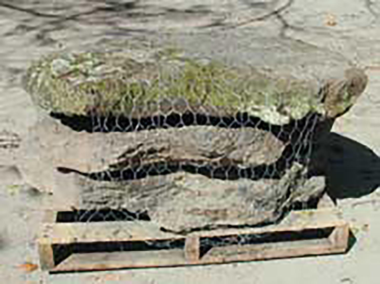 Moss Rock Fieldstone