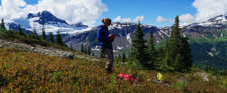 A researcher working in the alpine zone on the side of a mountain