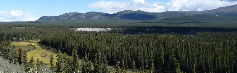 Landscape photograph of forest and mountains in the north of Canada