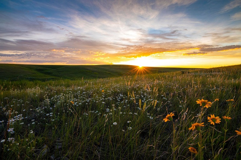 The sun rising over a field of wild flowers