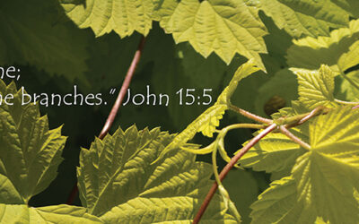 I Am the Vine… You Are the Branches