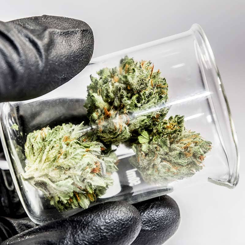 Cultivation and Manufacturing Processes and Testing