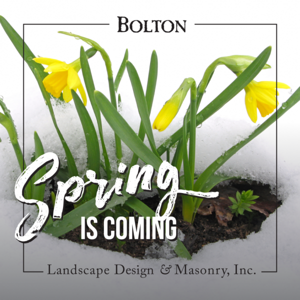 Early Blooming Bulbs and Perennials