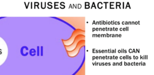 Essential oil for virus and bacteria