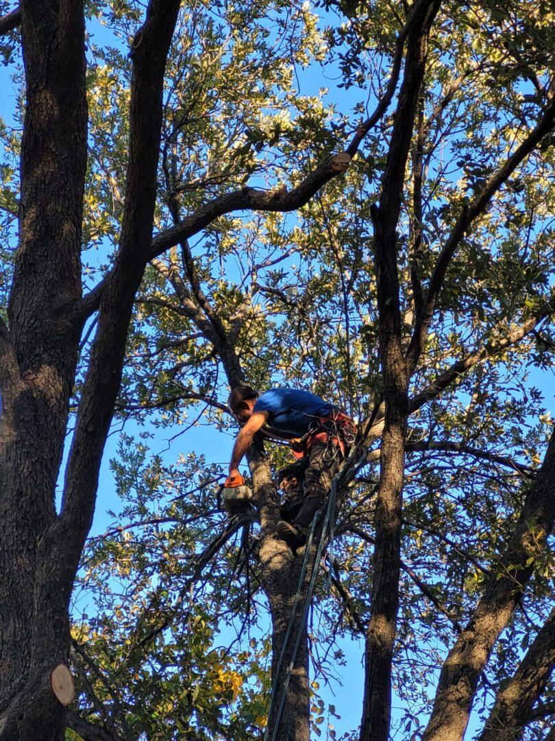Service- Tree Trimming