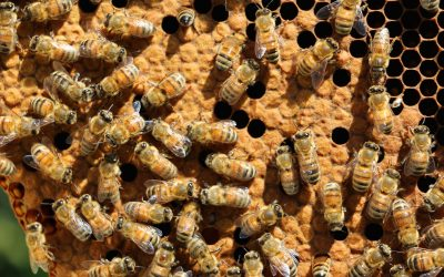 Baby Bees' Brain Growth Adversely Affected by Neonicotinoid Insecticides
