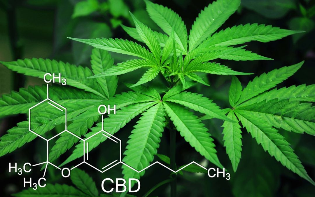 Lawsuit Filed: The 'Wild West' of Organic CBD Marketing Targeted