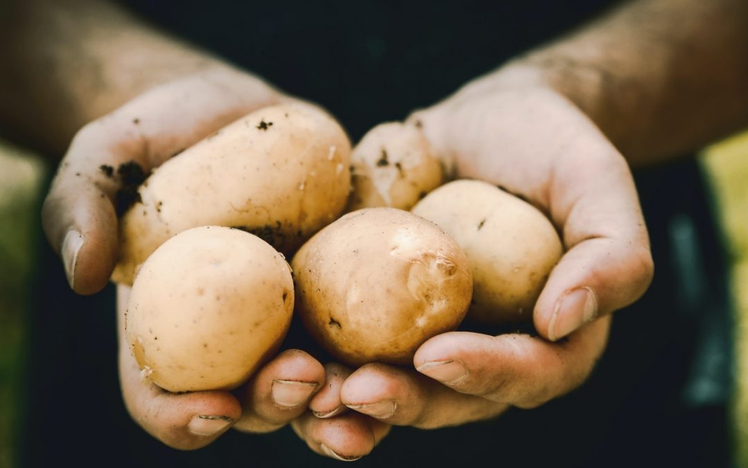 Will Our Small Farms Survive the Pandemic?