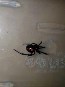 Exterminator in Connecticut