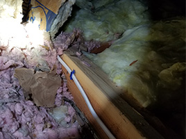 Insulation Destroyed by rodents. Rodents use insulation for nesting material.