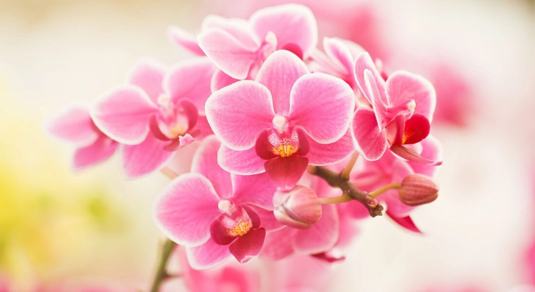 Top 5 Houseplants For Mother's Day