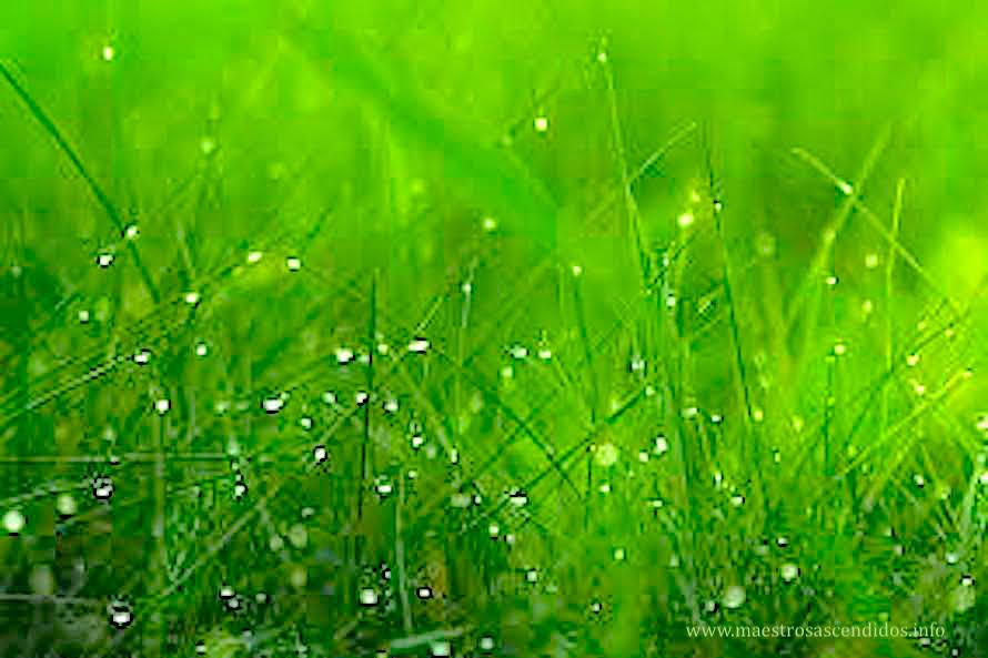 Verde Ciprés