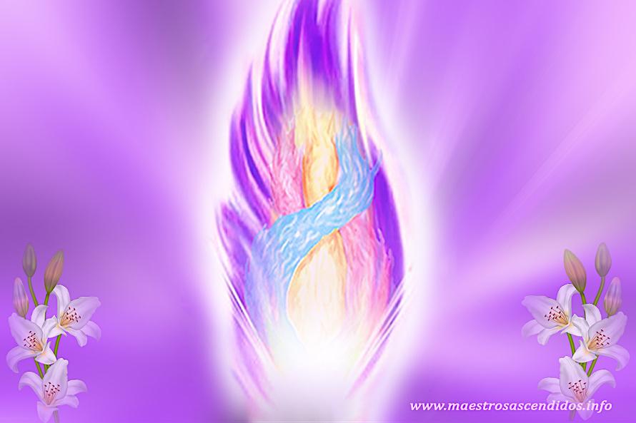 Llama Violeta