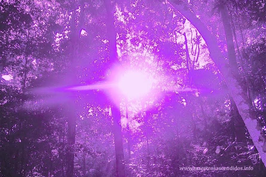sol violeta