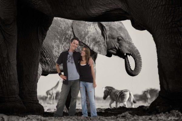 Elephant's Frame