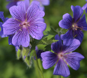 skin-flowers2