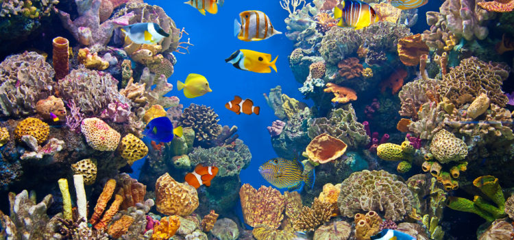 The Benefits of Ozone in Aquariums