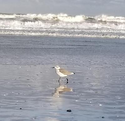 wrightsville-beach-seagull