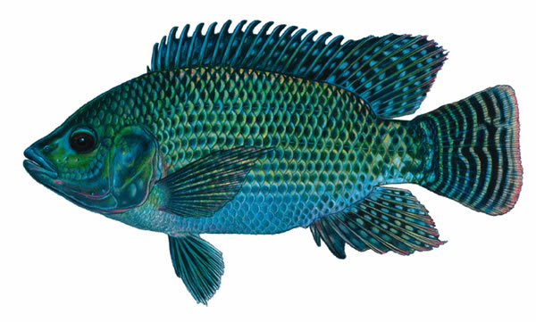 Mercury toxicity kids fish