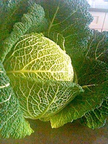 Market Inspiration: Savoy Cabbage | urbnspice.com