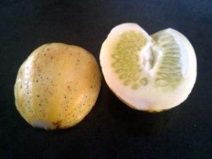 Lemon Cucumber   urbnspice.com