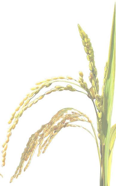 stalking-rice-genome-fade.jpg?time=1628110602
