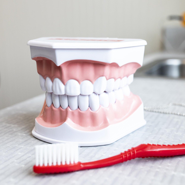 Dental Teeth and Toothbrus