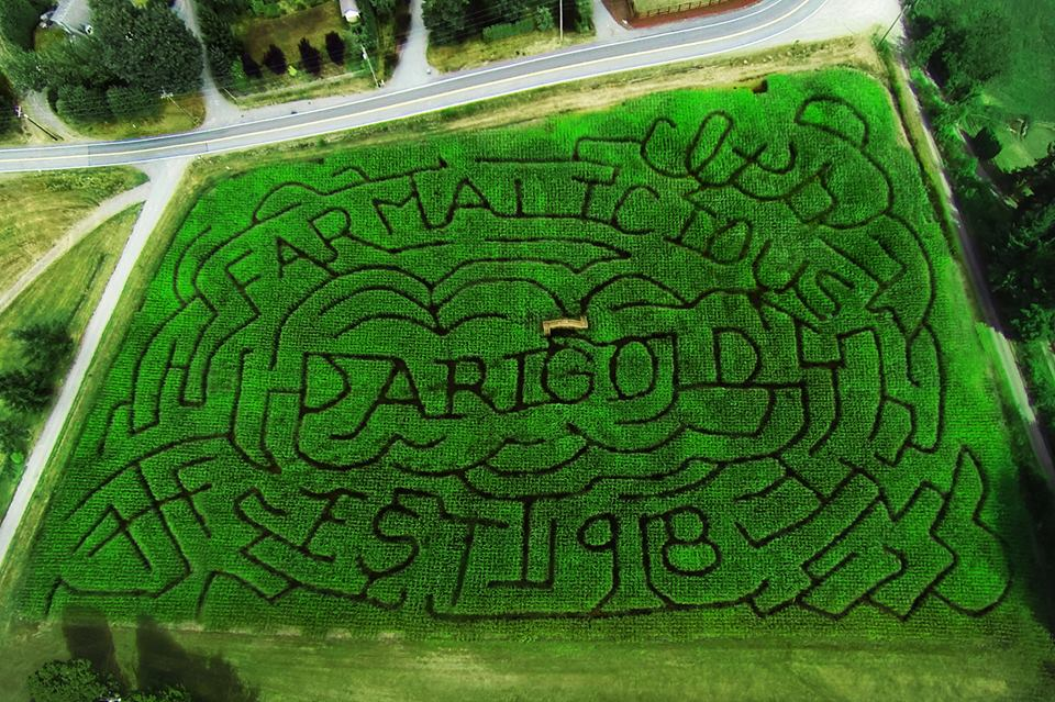 Want To Break The Corn Maze Record? Consider Booking A Hot Air Balloon Flight