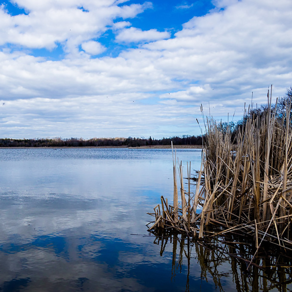 Lake Ontario is a convenient 5-minute drive, and nature is just steps away from Mondria 1 - the beautiful Farewell Creek Park is just across the street.