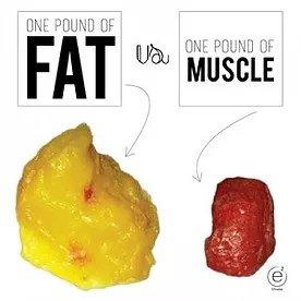 musclefat