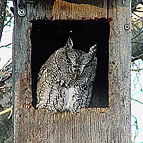 cliffshackelford_feb2006b