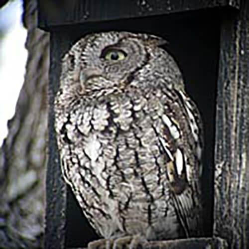 cliffshackelford_feb2007